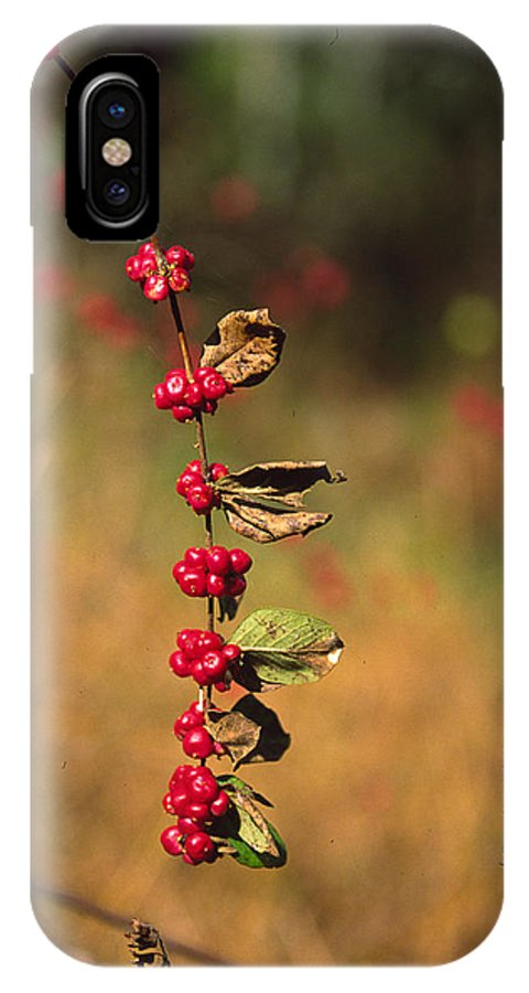 Fall Colors IPhone X Case featuring the photograph Another Year by Randy Oberg