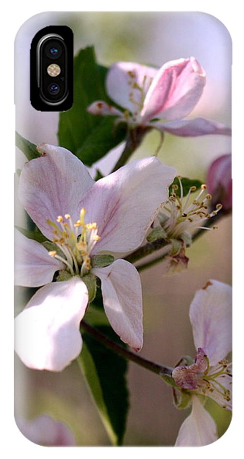 Apple IPhone X Case featuring the photograph Apple Blossom Time by Diane Merkle
