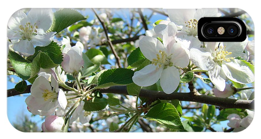 �blossoms Artwork� IPhone X Case featuring the photograph Apple Blossoms Art Prints 60 Spring Apple Tree Blossoms Blue Sky Landscape by Baslee Troutman