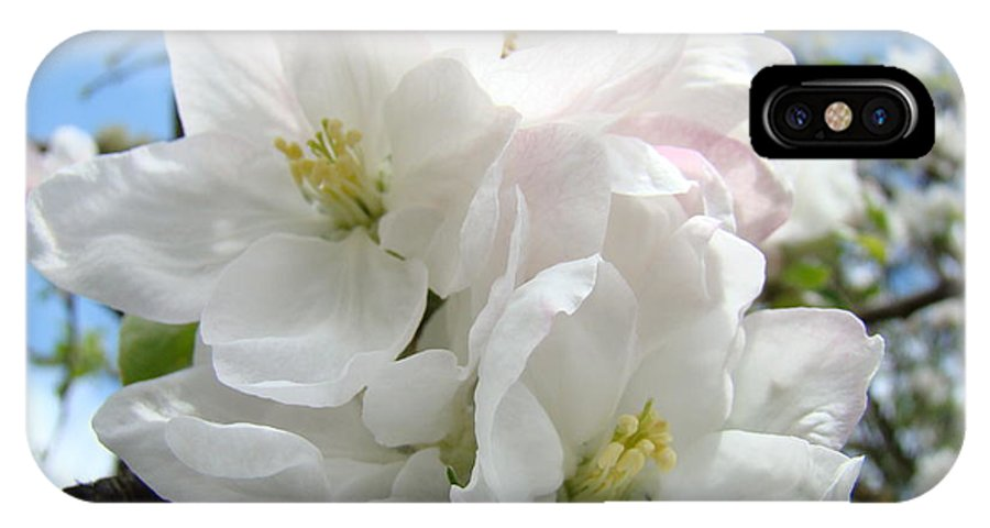 �blossoms Artwork� IPhone X Case featuring the photograph Apple Blossoms Art Prints Giclee 48 Spring Apple Tree Blossoms Blue Sky Macro Flowers by Baslee Troutman