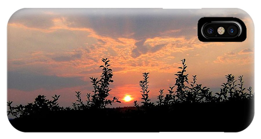 Sunset IPhone X Case featuring the photograph Apple Orchard Silhouette by Will Borden
