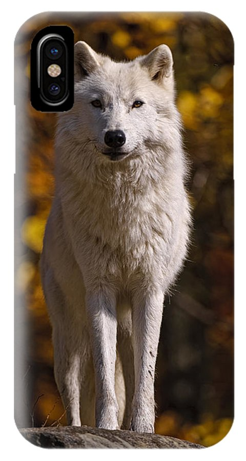 Michael Cummings IPhone X Case featuring the photograph Arctic Wolf On Rocks by Michael Cummings
