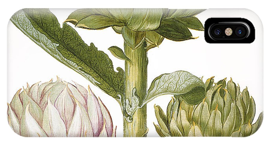 1613 IPhone X Case featuring the photograph Artichoke, 1613 by Granger