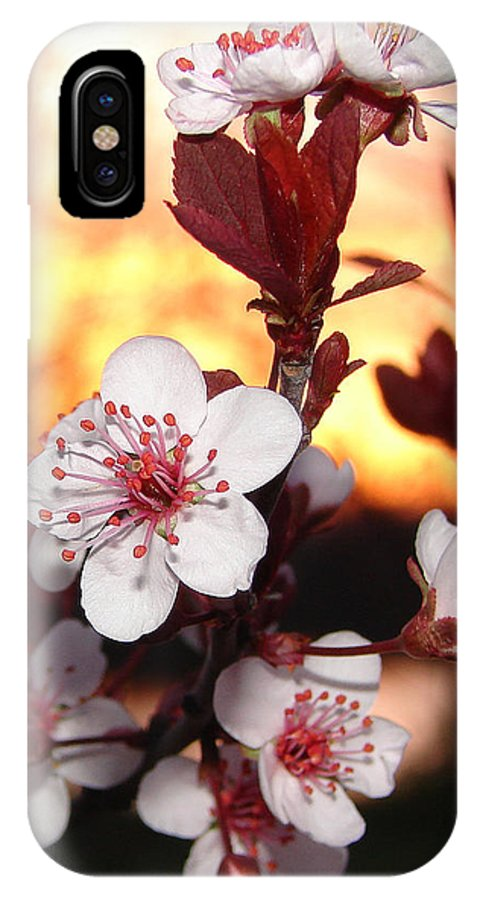 IPhone Case featuring the photograph As The Sun Sets by Luciana Seymour