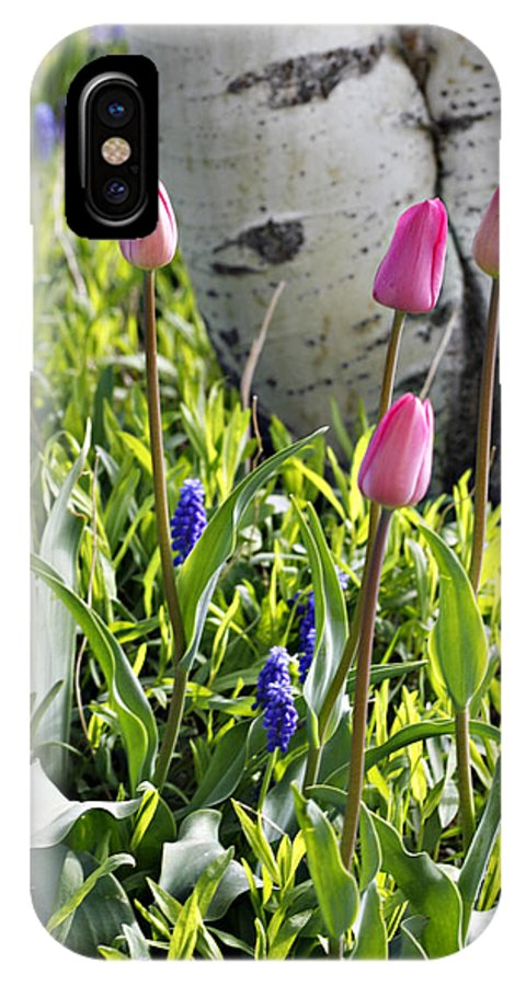 Aspen IPhone X Case featuring the photograph Aspen And Tulips by Marilyn Hunt