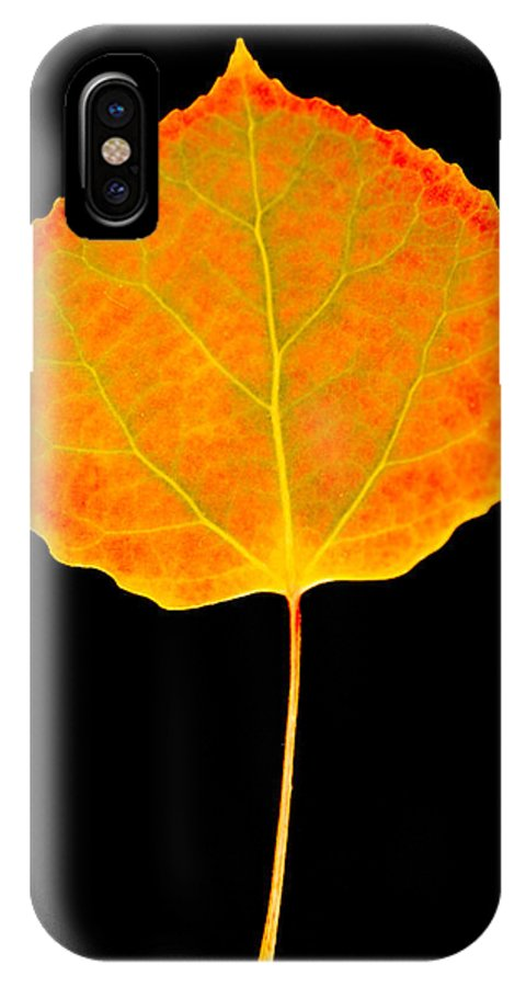 Leaf IPhone X Case featuring the photograph Aspen Leaf by Marilyn Hunt