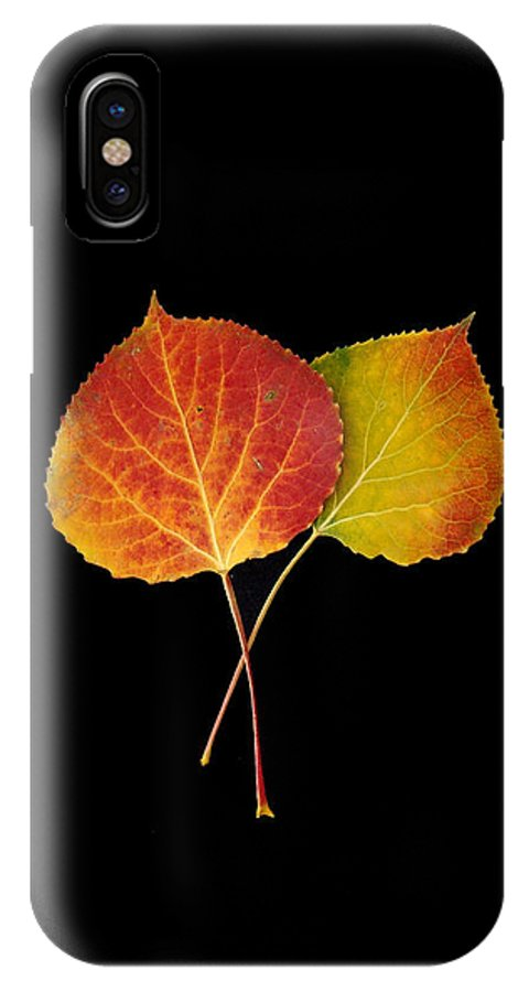 Leaves IPhone X Case featuring the photograph Aspen Leaves by Carol Milisen
