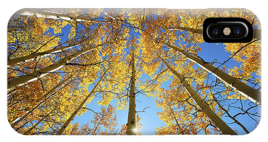 Aspen IPhone X Case featuring the photograph Aspen Tree Canopy 2 by Ron Dahlquist - Printscapes