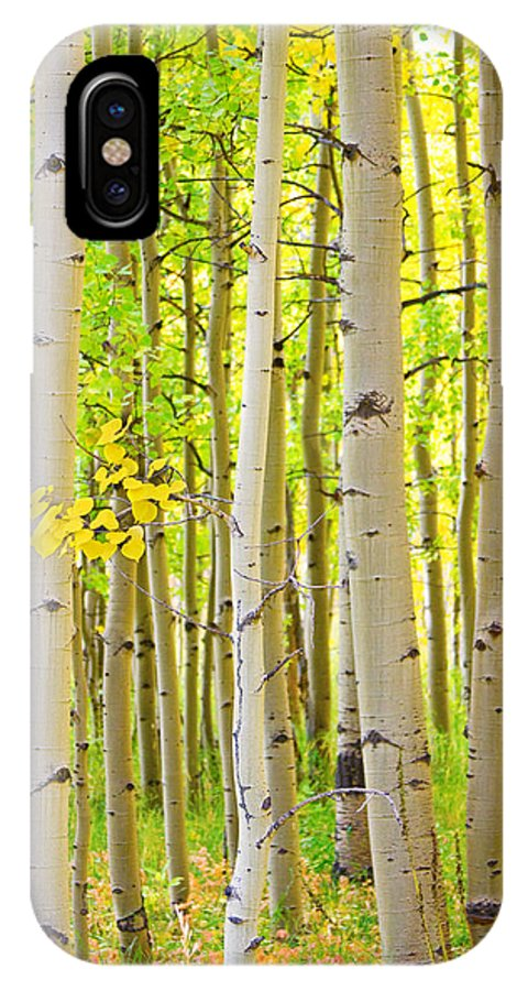 Aspens IPhone X Case featuring the photograph Aspen Tree Forest Autumn Time Portrait by James BO Insogna