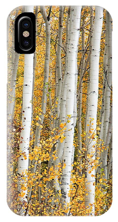 Aspen IPhone X Case featuring the photograph Aspen With Fall Color by Dori Peers