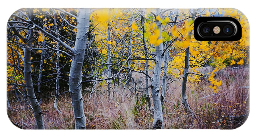 Aspen Trees IPhone X / XS Case featuring the photograph Aspens In Autumn by Vishwanath Bhat