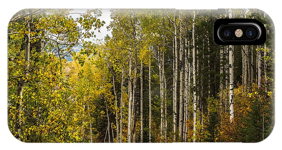 Idaho IPhone X Case featuring the photograph Aspens In Autumn by Yeates Photography