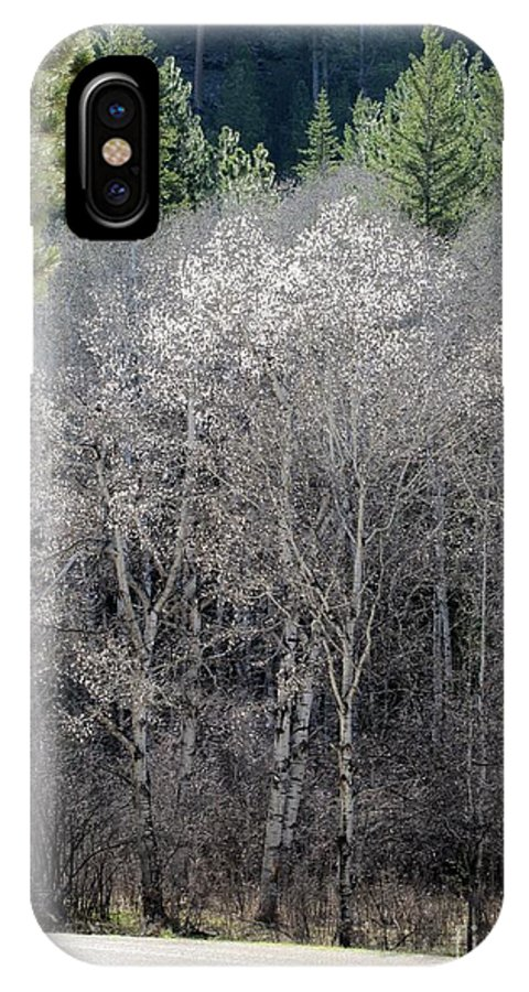 Landscape IPhone X Case featuring the photograph Aspens In Morning Light by Barbara Henry