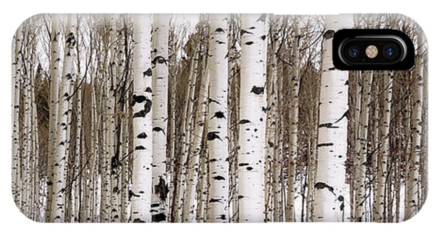 Aspen IPhone X Case featuring the photograph Aspens In Winter Panorama - Colorado by Brian Harig