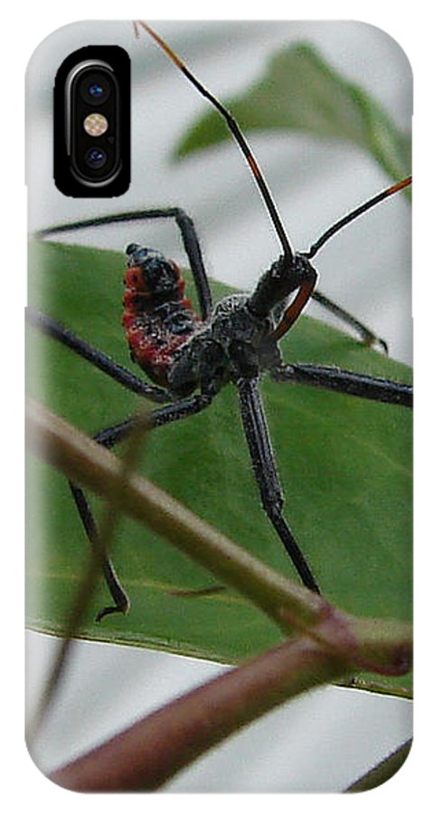 Insect Red Black Green Leaf IPhone X Case featuring the photograph Assassin Bug by Luciana Seymour