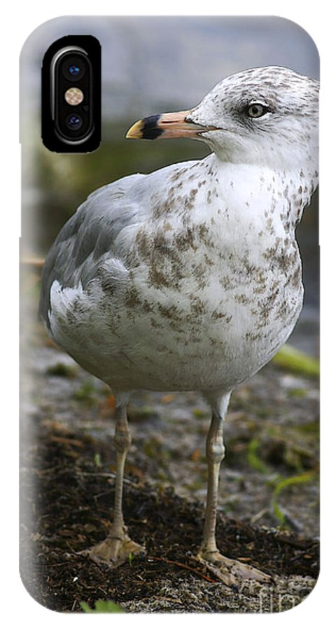 Bird IPhone X Case featuring the photograph At The Beach by Deborah Benoit
