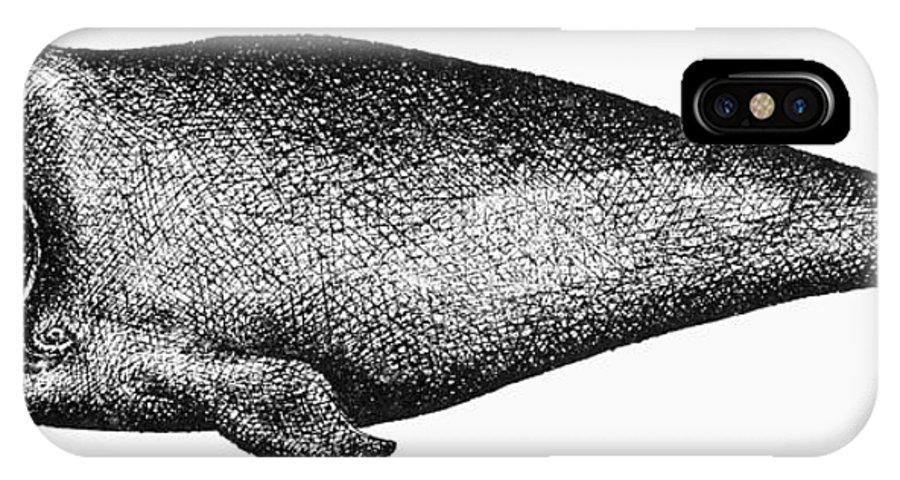 Aquatic IPhone X Case featuring the photograph Atlantic Right Whale by Granger