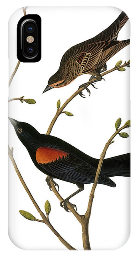 1838 IPhone X Case featuring the photograph Audubon: Blackbird by Granger