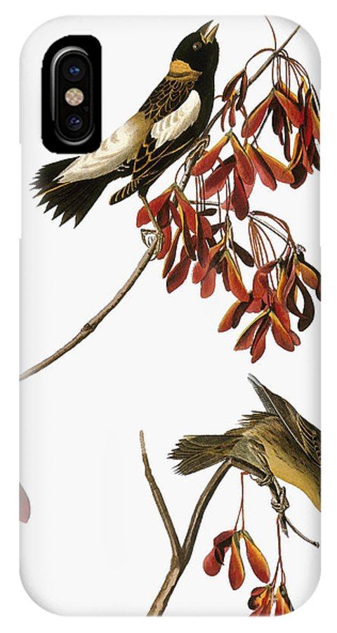 1838 IPhone X Case featuring the photograph Audubon: Bobolink by Granger