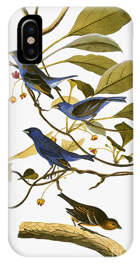 1827 IPhone X Case featuring the drawing Indigo Bunting, 1827-38 by John James Audubon