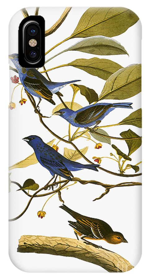 1827 IPhone X Case featuring the photograph Audubon: Bunting, 1827-38 by Granger