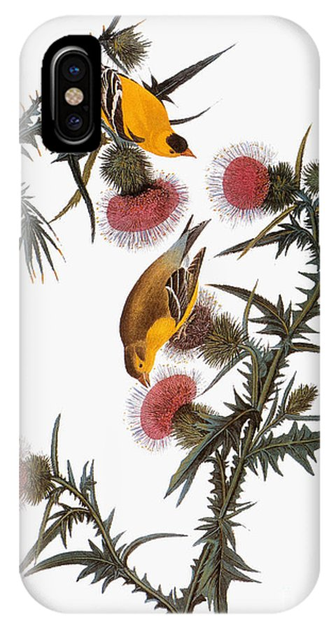 1838 IPhone X Case featuring the photograph Goldfinch by John James Audubon