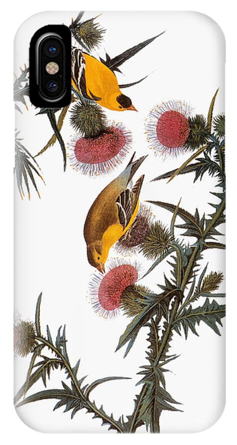 1838 IPhone X Case featuring the drawing American Goldfinch by John James Audubon