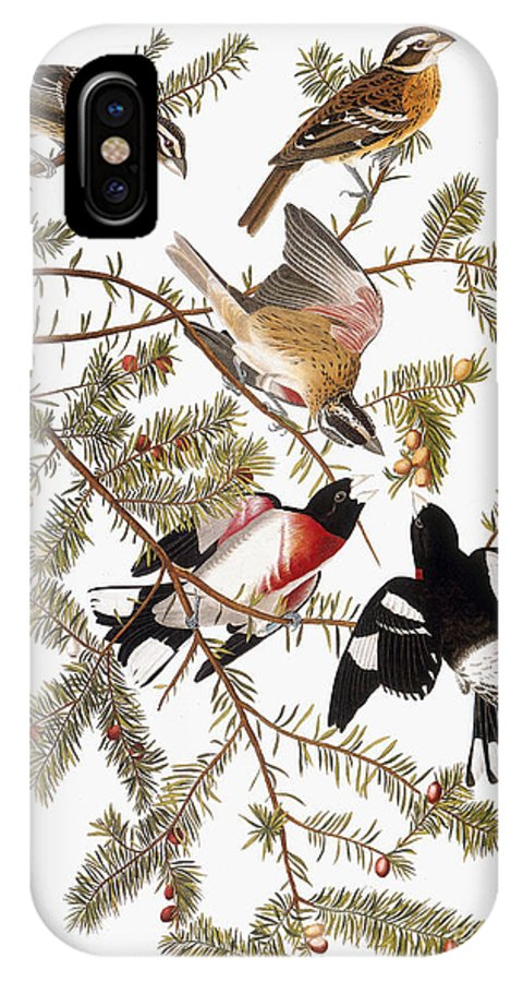 1838 IPhone X Case featuring the photograph Audubon: Grosbeak by Granger
