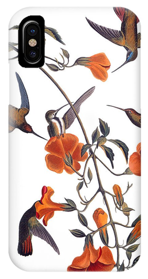 1838 IPhone X Case featuring the drawing Hummingbird by John James Audubon