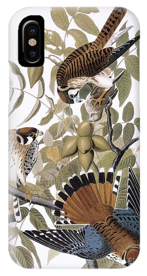 1827 IPhone X Case featuring the photograph Audubon: Kestrel, 1827 by Granger