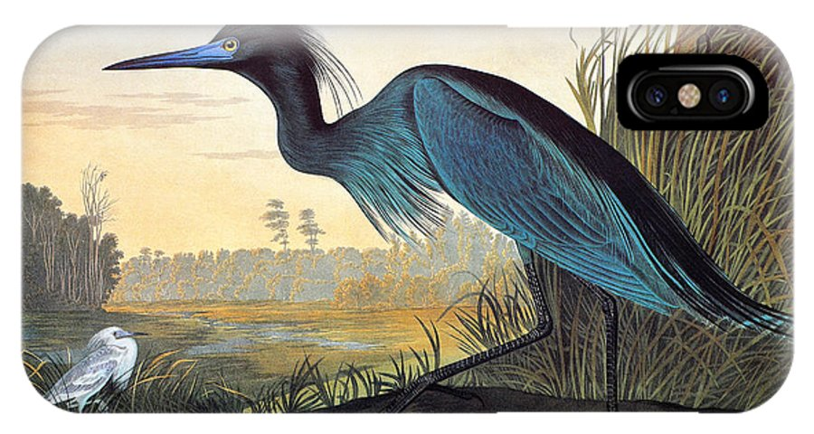 1827 IPhone X Case featuring the drawing Little Blue Heron by John James Audubon
