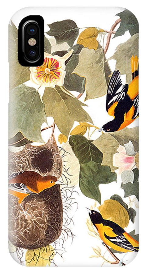 1838 IPhone X Case featuring the photograph Audubon: Oriole by Granger