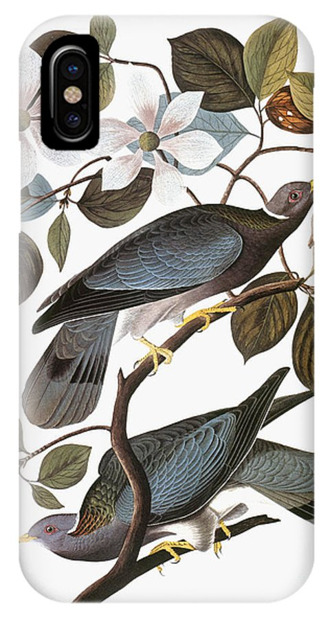 1838 IPhone X Case featuring the photograph Audubon: Pigeon by Granger