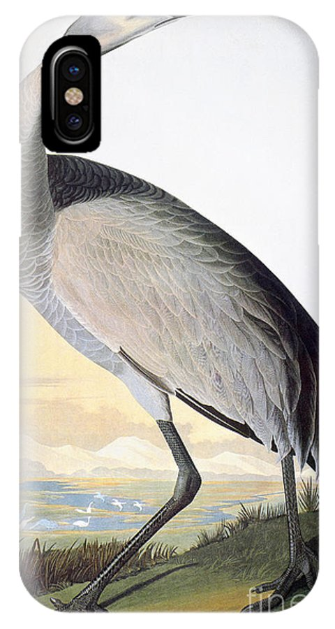 1827 IPhone X Case featuring the drawing Sandhill Crane by John James Audubon