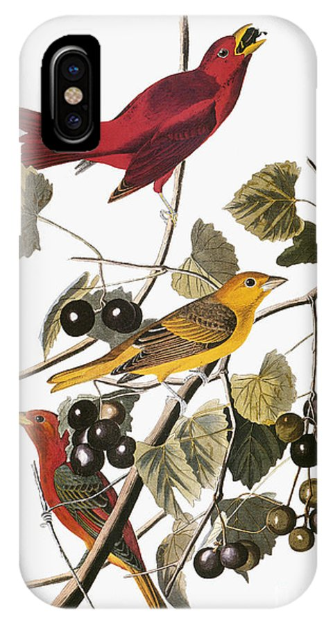 1838 IPhone X Case featuring the drawing Summer Tanager by John James Audubon