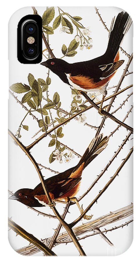 1838 IPhone X Case featuring the photograph Audubon: Towhee by Granger