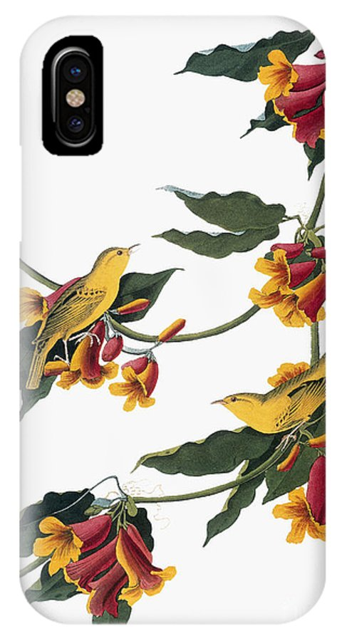 1827 IPhone X Case featuring the photograph Audubon: Vireo, 1827-38 by Granger
