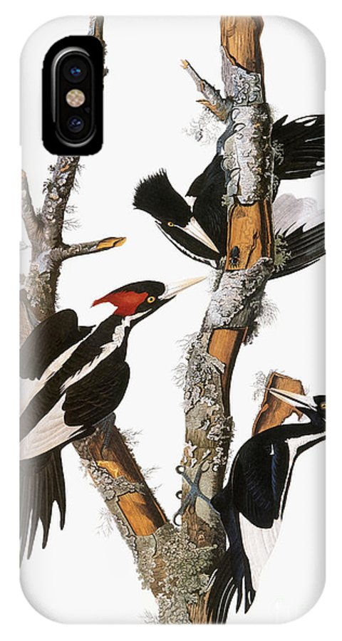1838 IPhone X Case featuring the photograph Audubon: Woodpecker by Granger