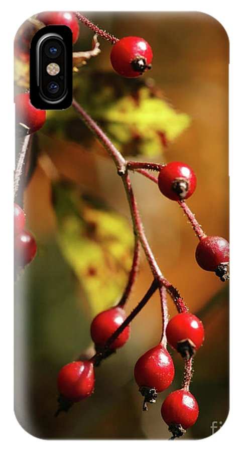 Berries IPhone X Case featuring the photograph Autumn Berries by Linda Shafer