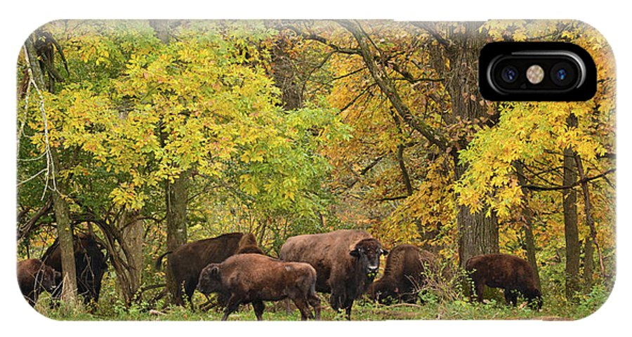 Bison IPhone X Case featuring the photograph Autumn Bison by Bonfire Photography