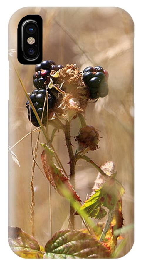 Blackberry IPhone X Case featuring the photograph Autumn Blackberries by Jackie Tweddle