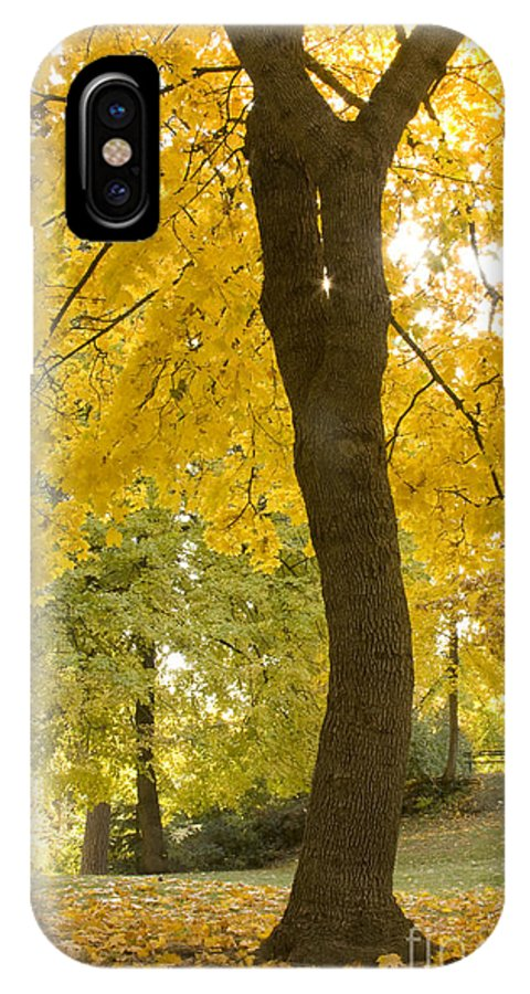 Tree IPhone X Case featuring the photograph Autumn Dance by Idaho Scenic Images Linda Lantzy