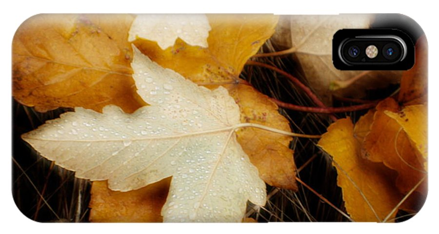 Leaf IPhone X Case featuring the photograph Autumn Dew by Idaho Scenic Images Linda Lantzy