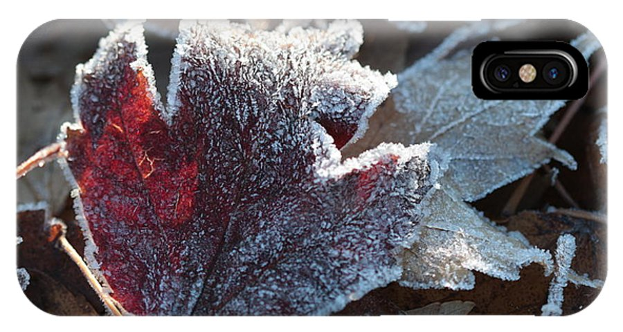 Autumn IPhone X Case featuring the photograph Autumn Ends, Winter Begins 2 by Linda Lees