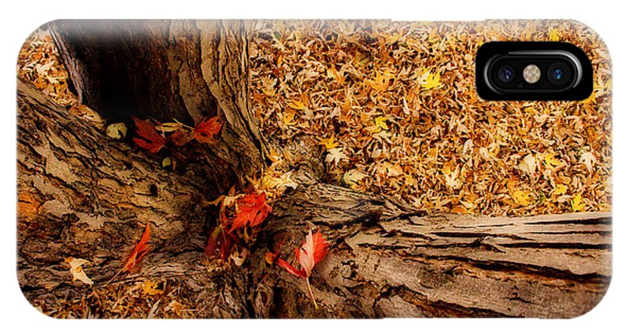 Maple Tree IPhone X / XS Case featuring the photograph Autumn Fall Dream by James BO Insogna