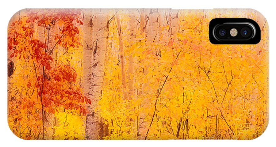 Photography IPhone X Case featuring the photograph Autumn Forest Wbirch Trees Canada by Panoramic Images