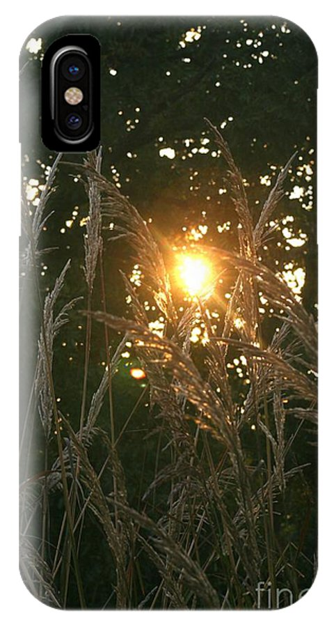 Light IPhone X Case featuring the photograph Autumn Grasses In The Morning by Nadine Rippelmeyer