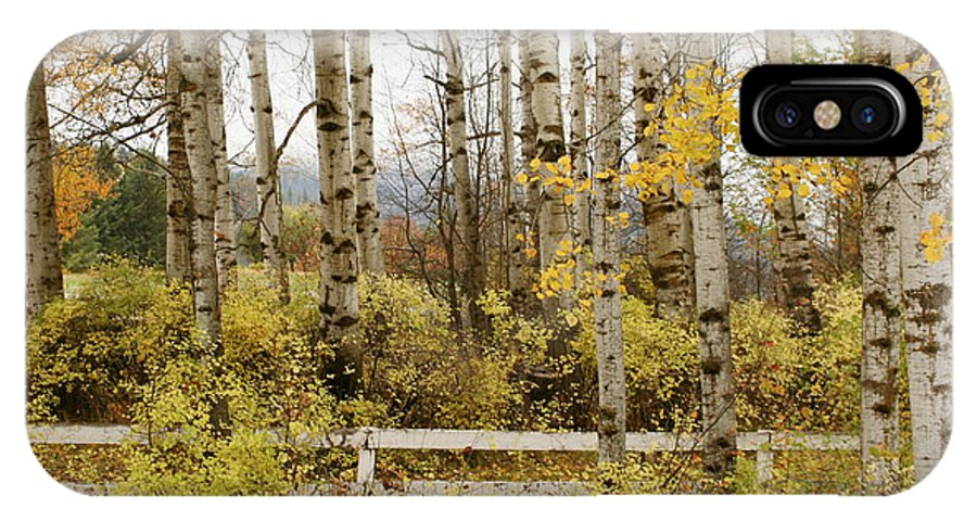 Grove IPhone X Case featuring the photograph Autumn Grove by Idaho Scenic Images Linda Lantzy