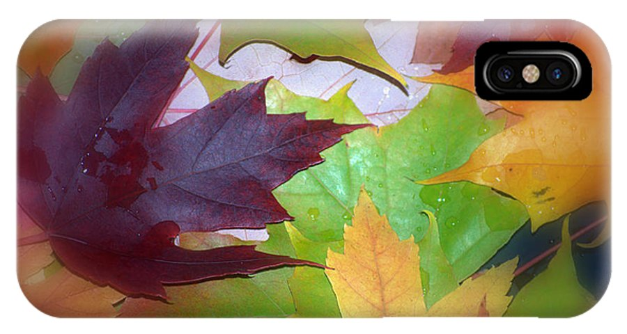 Trees IPhone Case featuring the photograph Autumn by Larry Keahey