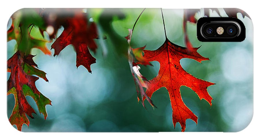 Autumn Fall Leaf Leaves Red Seasons Lone Nature Botanical IPhone X Case featuring the photograph Autumn Leaves by Jill Reger